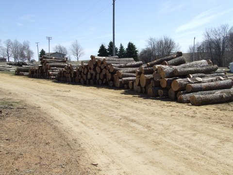 log piles waiting to be milled